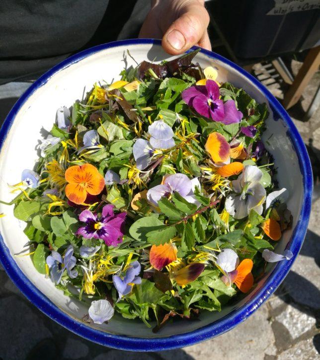 Jedlé květy. Jak ochucovat a dobře jíst - OMG